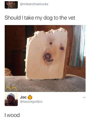 Should i take my dog to the vet...