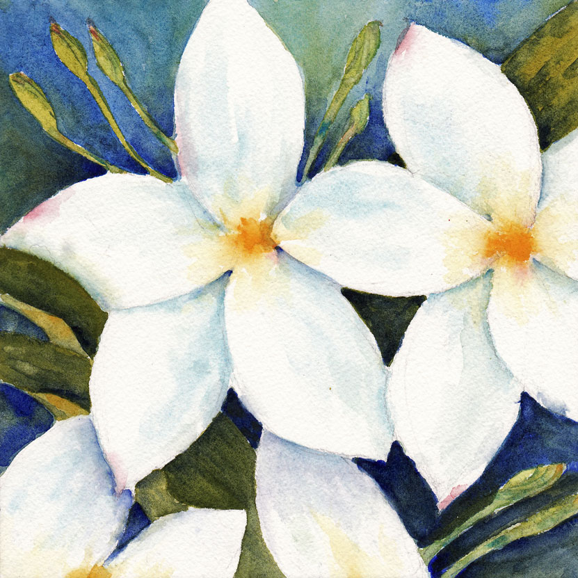 Live cheap and make art usa a painting a day day 30 white flowers a painting a day day 30 white flowers mightylinksfo