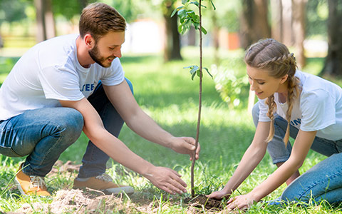 Tree sapling planting in well drained fertile soil