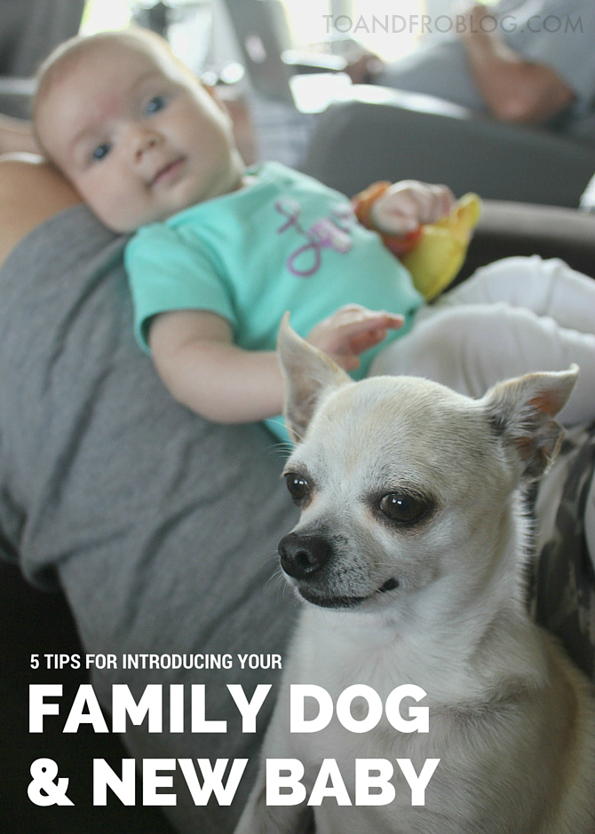 5 Tips for Introducing You Family Dog & New Baby