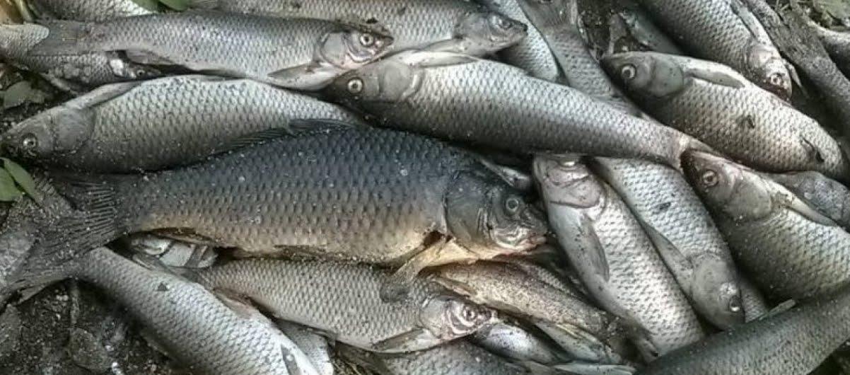 Pesci in diminuzione nel mondo a causa del riscaldamento globale.