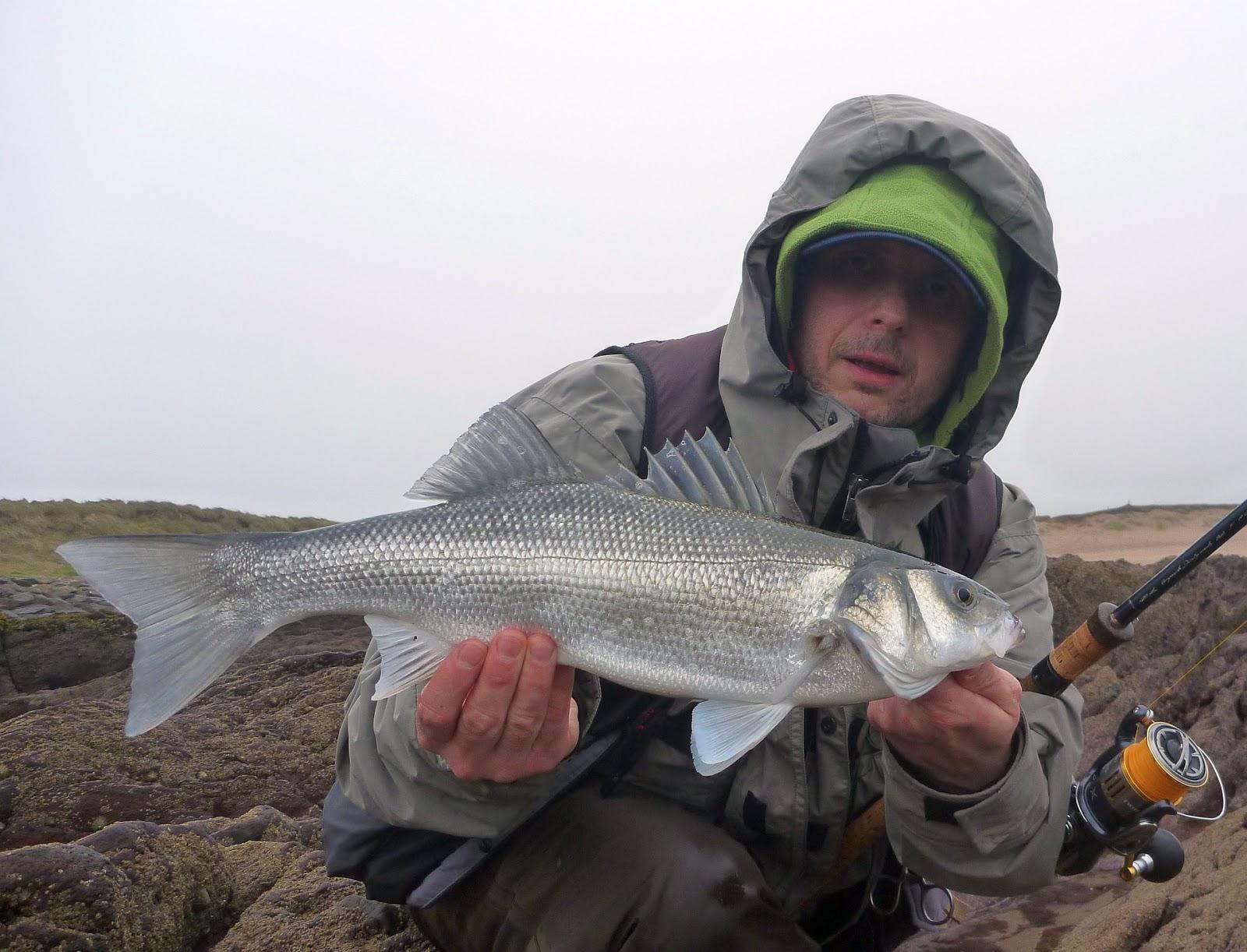 Sea bass hunting sea bass season 2017 open for Bucs fishing report