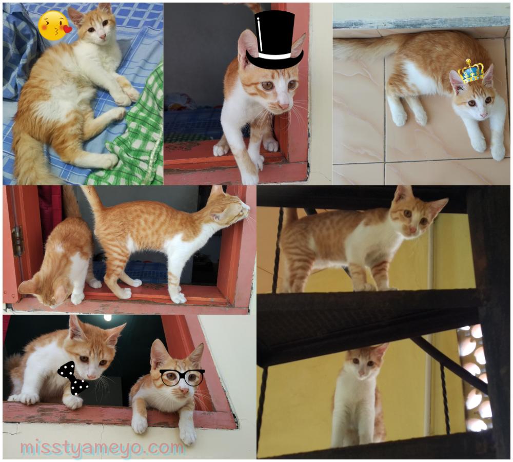 Kisah 5 Anak Kucing Yang Terbuang Kehujanan Dan Kedinginan Yang