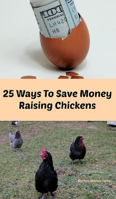 How To Save Money Raising Chickens.