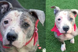 Final call for the saddest looking girl, shelter put her on the 'euth list'