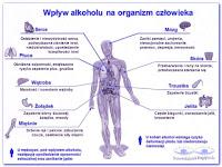 Wplyw-alkoholu-na-organizm-czlowieka