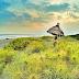 Keindahan Objek Wisata Pantai Cemara Sewu Bantul Jogja Yang Mempesona