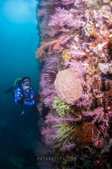 Scuba diving, UNDERWATER PHOTOGRAPHY, BICOL, DIVE MANTA BOWL, DIVE TICAO, DIVE San Miguel ISLAND, DIVE PHILIPPINES, PAPARAZSEA