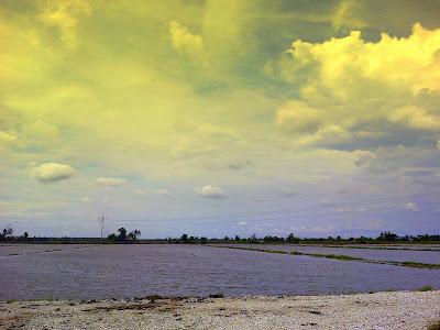 sawah padi di tanjung karang selangor