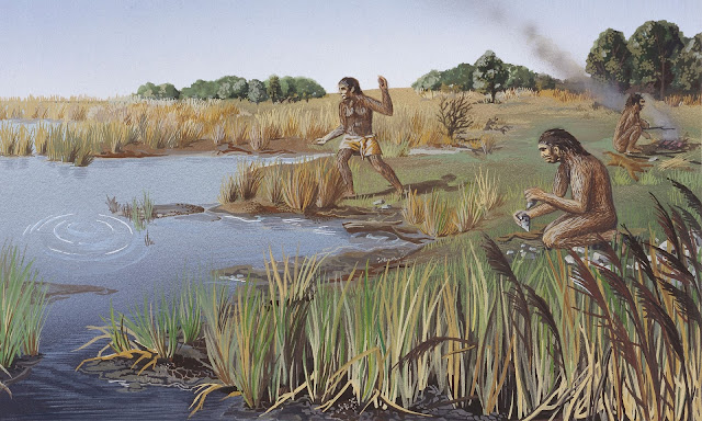 Homo erectus may have sailed to islands and used language