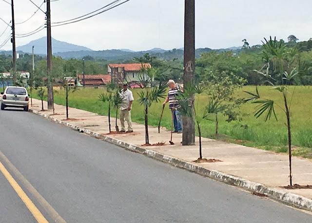 Prefeitura de Registro-SP efetua arborização no Jardim Brasil