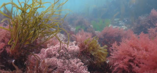 Algas, mar y biologia