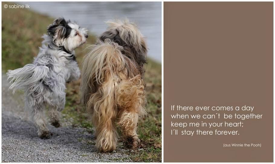 Tibet Terrier Chiru und Biewer Yorkshire Terrier Lotta on tour