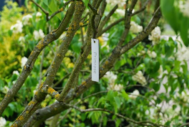 lilaki kórnik arboretum