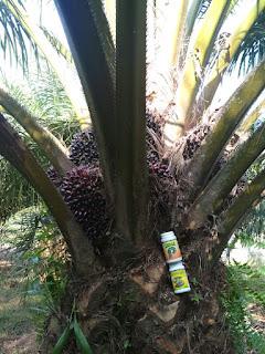 jual pupuk untuk pohon kelapa