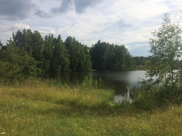 Как выглядит берег реки летом