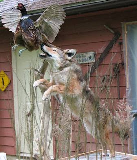 Everything Wild Taxidermy Flintknapping Diy Life Pictures