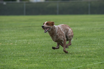 The world's fastest ACD.
