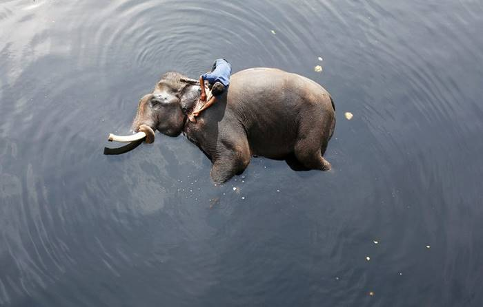 A man bathes an elephant in the river Jumna. New Delhi, February 6th. Posted by: Adnan Abidi