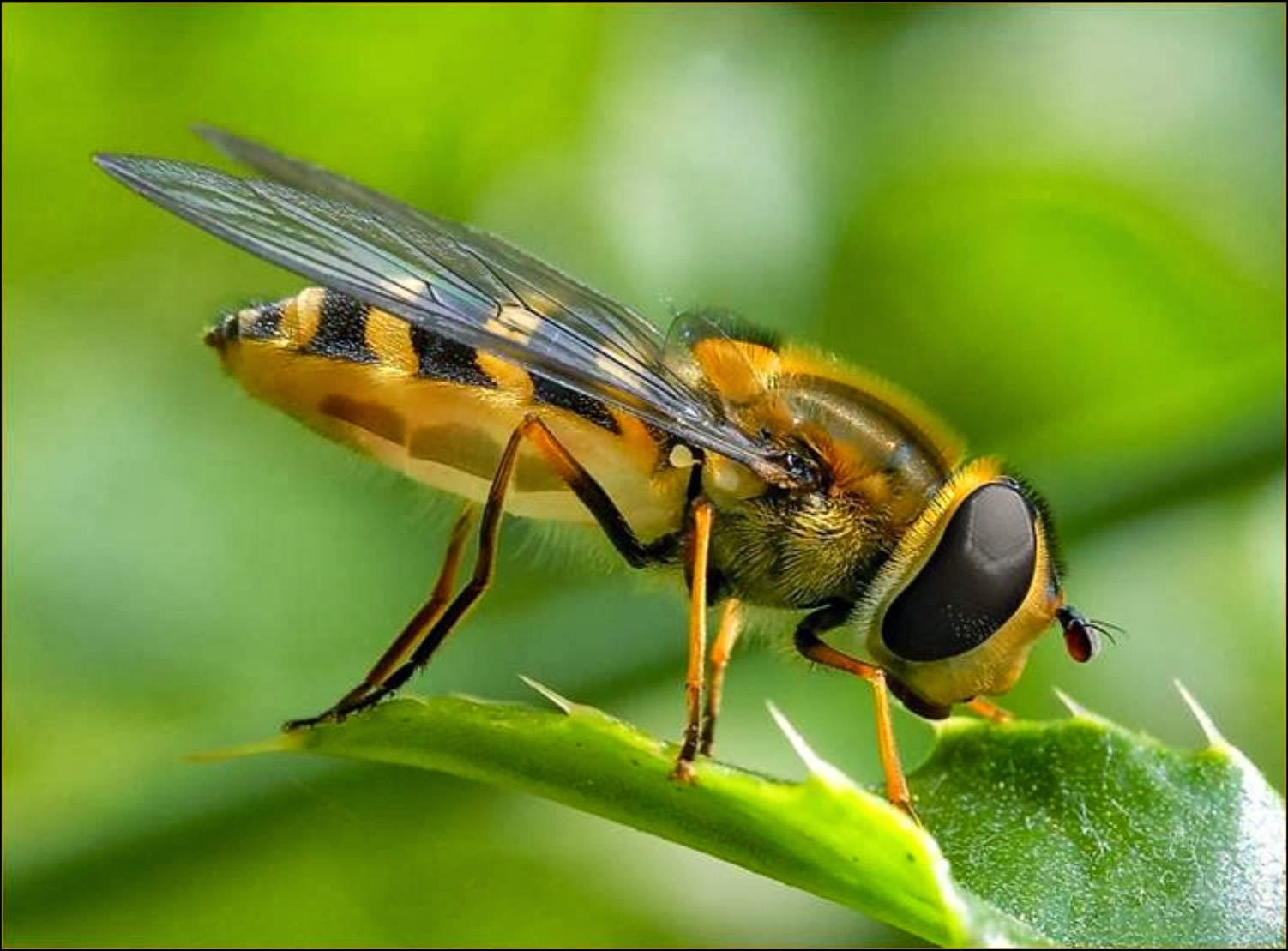 King's Christian School Biology: Subphlyum Hexoda: Class Insecta