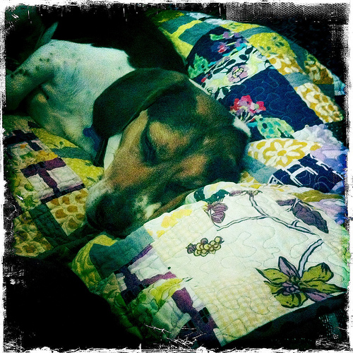 Pets on Quilts {show}