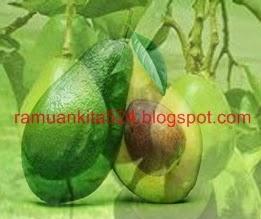 yaitu tumbuhan buah tahunan yg tumbuh subur didaaerah tropis menyerupai negara kita Indone 4 Resep Jus Buah Alpukat Untuk Kesehatan