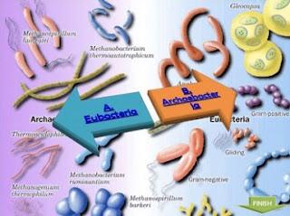 tabel perbedaan archaebacteria dan eubacteria,perbedaan archaebacteria dan eubacteria dalam bentuk tabel,perbedaan ciri antara archaebacteria dan eubacteria,perbedaan bakteri gram positif dan negatif,