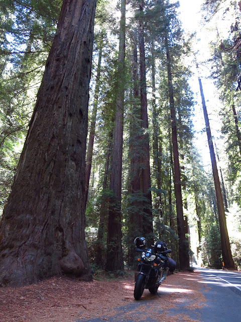 Aprilia Tuono Avenue of the Giants