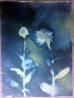 Wet cyanotype_Sue Reno_Image 435