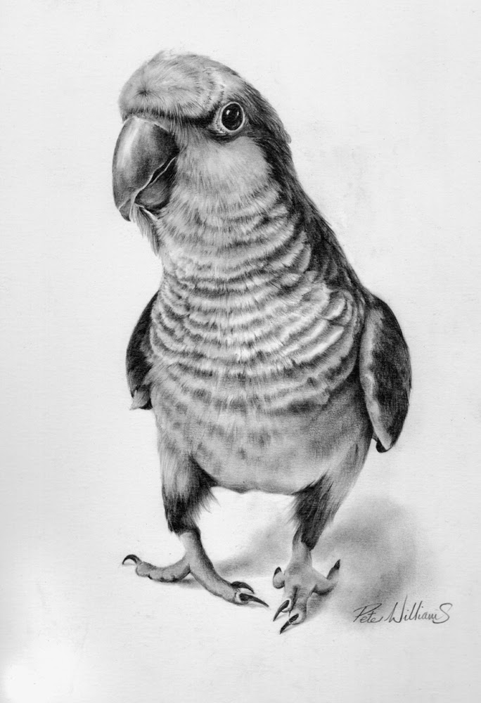 04-Parrot-Hyper-Realistic-Wildlife-Peter-Williams-www-designstack-co