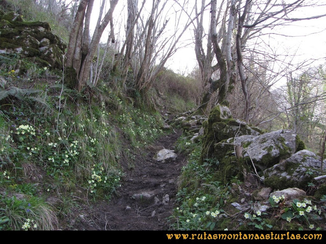Ruta Puente Vidosa, Jucantu: Sendero a Rubriellos