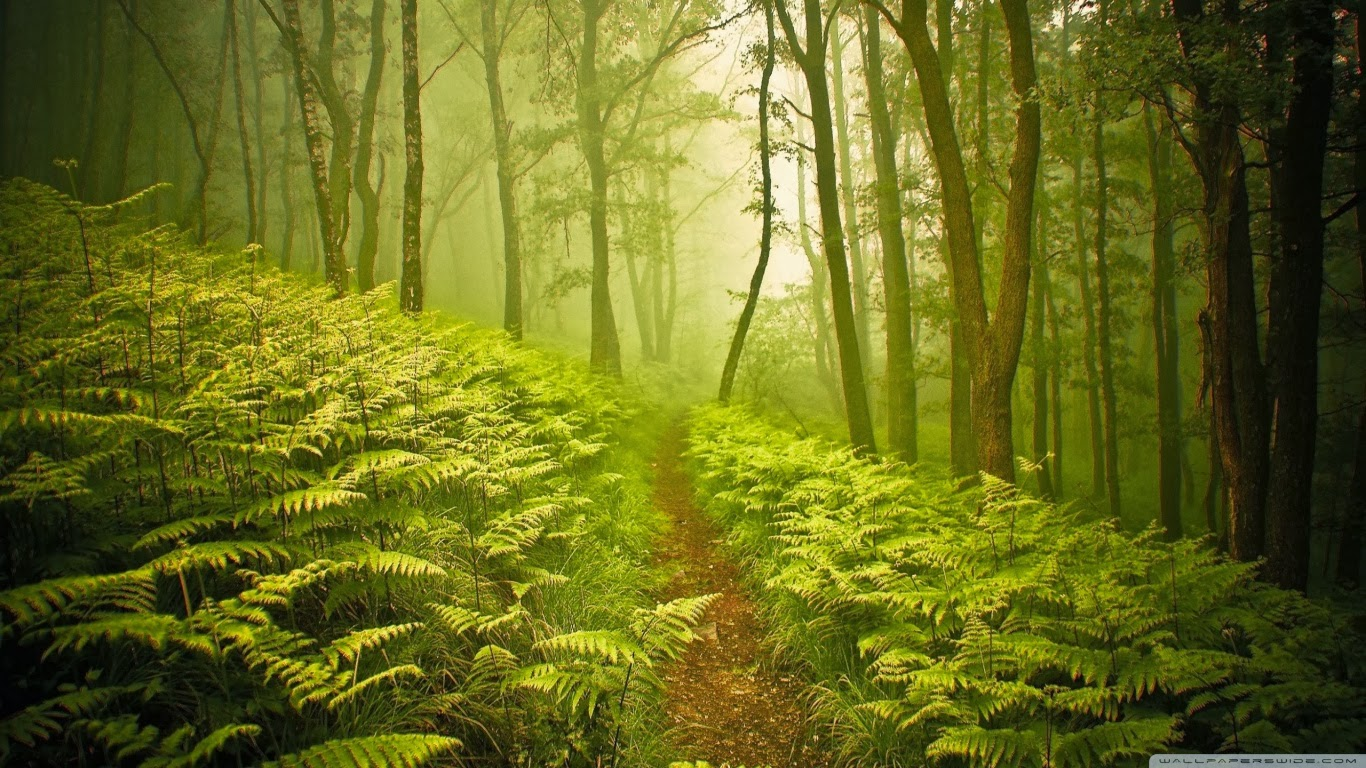 the forest تحميل