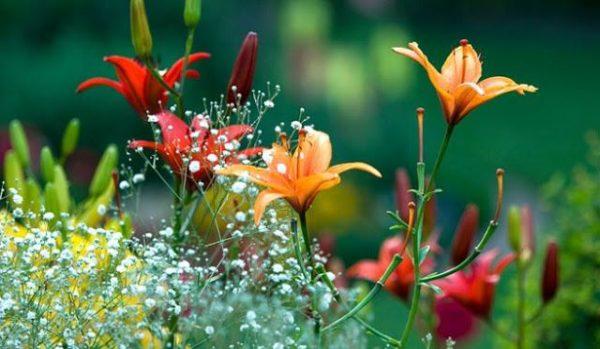 http://www.procreo.jp/labo/flower_garden.swf