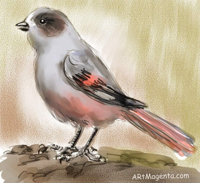 Bird Siberian Jay by ArtMagenta