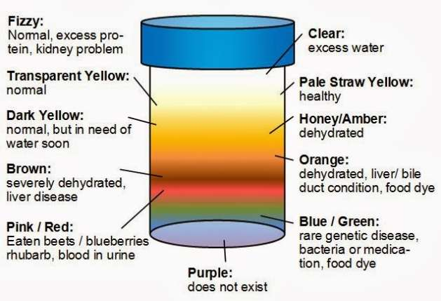 5 colours of urine & what they say about your health
