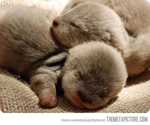 newborn baby otters