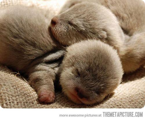 newborn baby otters