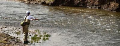 2 Cara Membuat Umpan Ikan Mas Rahasia Terbaik