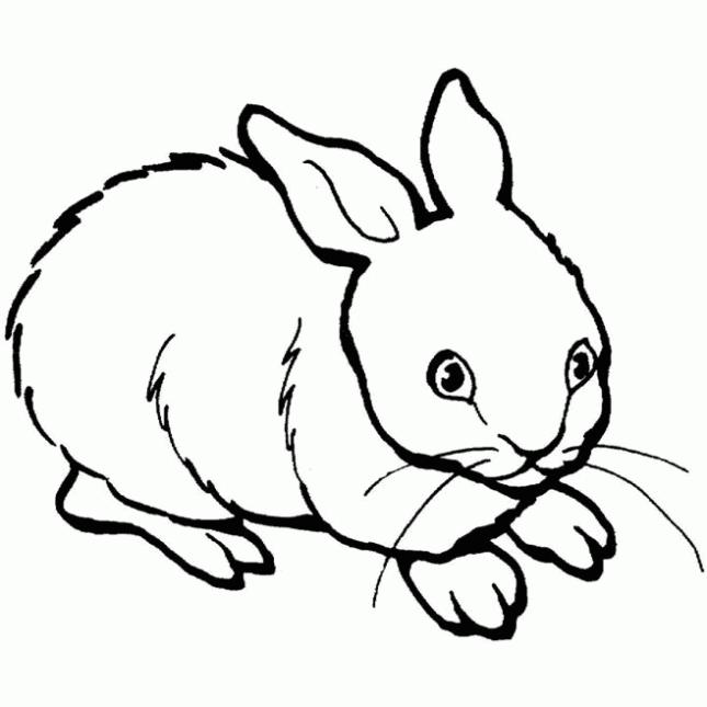 imagenes de animales domesticos para imprimir