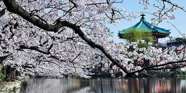 Jalan - Jalan Di Taman Ueno Jepang