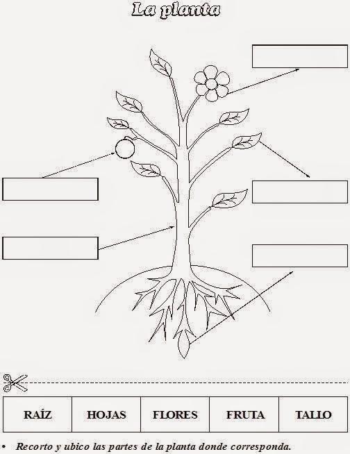 La tarea del educador moderno no es cortar selvas sino for Las partes de un arbol en ingles