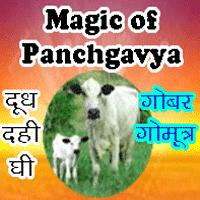 astrology use of panchgavya