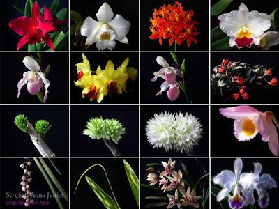 Fotos Orquídeas no Apê