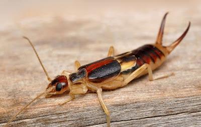 вредители растений насекомые