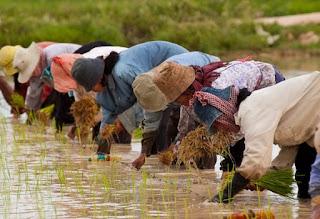 Pendaftaran CPNS Formasi Penyuluh Pertanian Seluruh Indonesia Tahun 2016 Resmi Dibuka