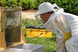 دراسة جدوى فكرة مشروع تربية النحل فى مصر 2020
