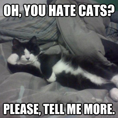 I Hate Cats 10 Reasons Why Cats Annoy Me