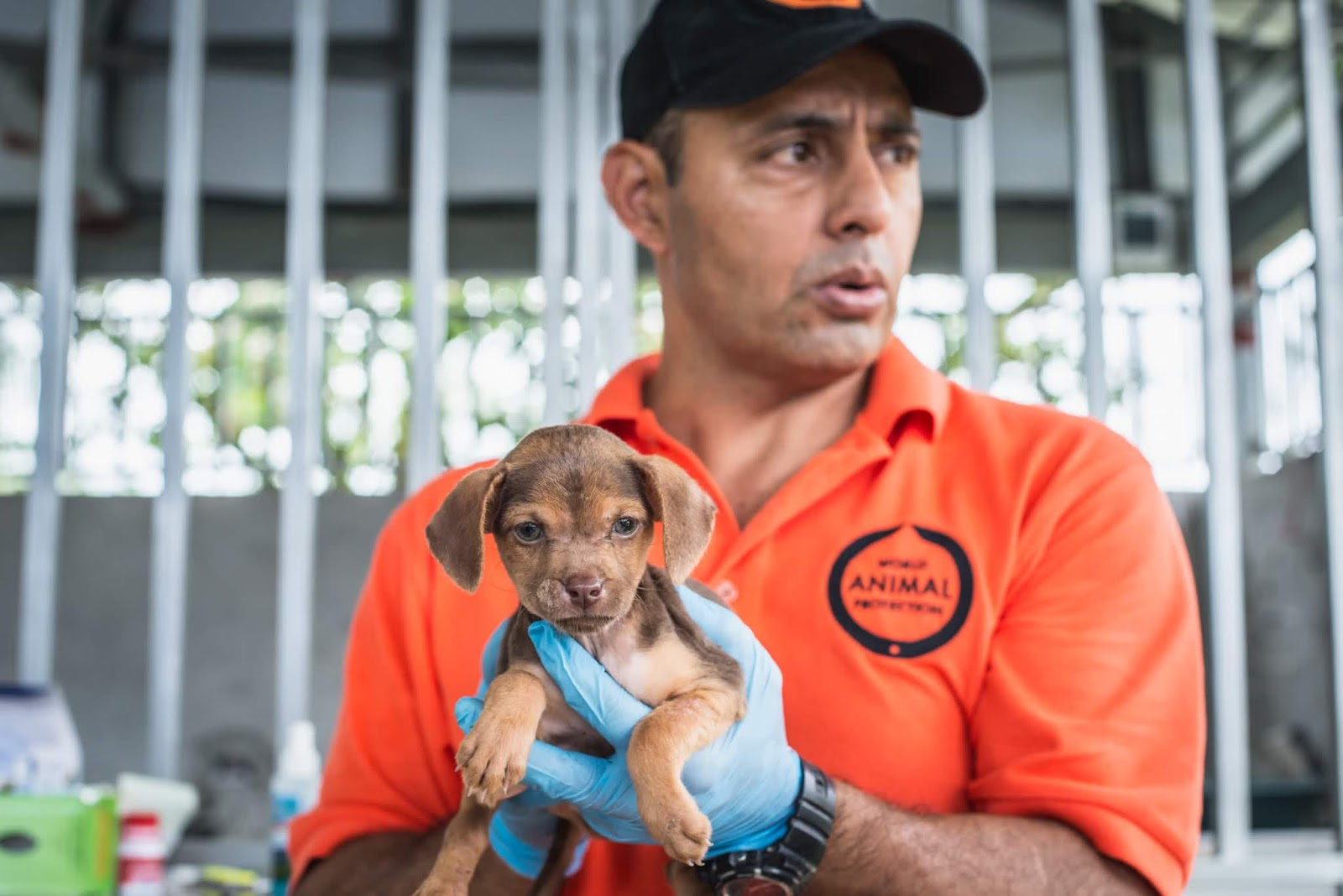 World Animal Protection Disaster response officer Sergio Vásquez holds a puppy left behind