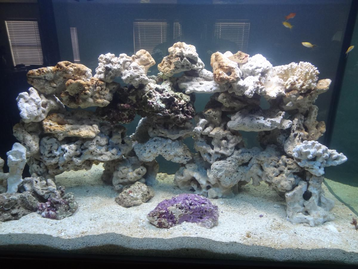 This Picture Is From One Of My Older Tanks In Which I Chose To Stack Rocks.