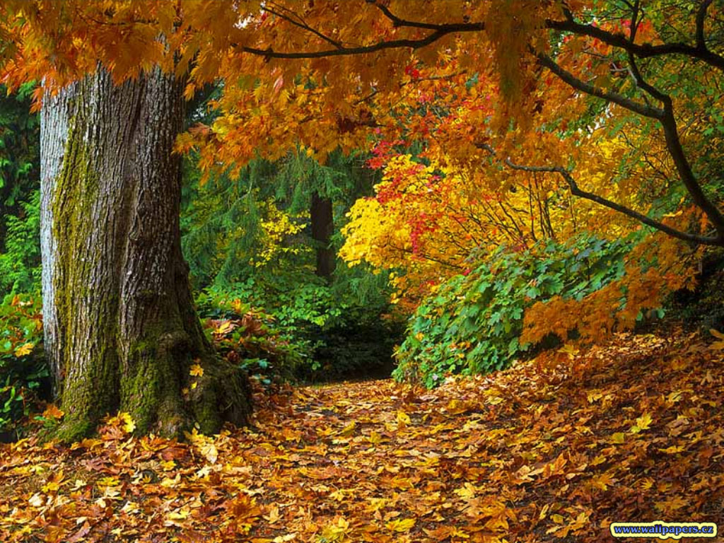 autumn leaf tree forest - photo #18
